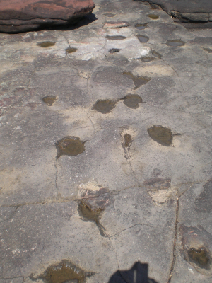 Bendricks dinosaur trackways