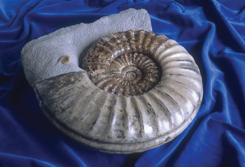 67-armchair-visit-to-the-jurassic-coast-asteroceras