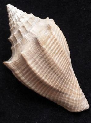 britains-cenozoic-fossils