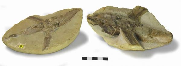 stones-fossil-secret