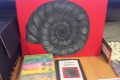 all-about-ammonites