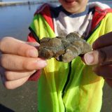 Fossil collecting success at Bracklesham