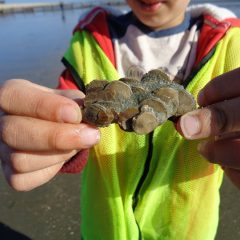 Fossil collecting fieldtrip at Bracklesham, West Sussex – Saturday 22nd July, 2017