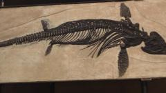 Fieldtrip to see Somerset's Ichthyosaur fossils – Saturday 17 February 2018