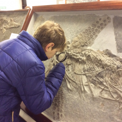 Fabulous fieldtrip to see the Ichthyosaurs in Street, Somerset