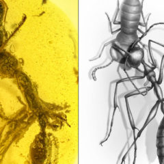 Fossil of Hell Ant proves different killer strategy