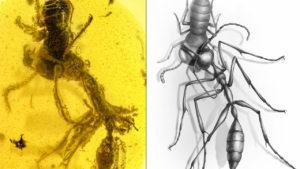 Hell Ant killing its prey
