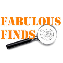 Fabulous Finds is Launched!