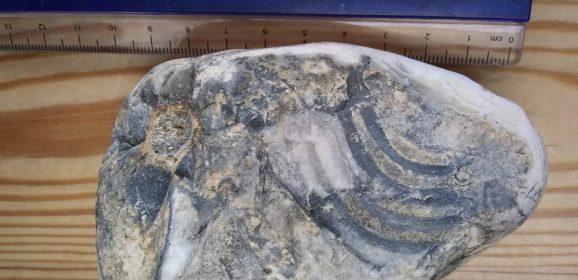 Miriam's Fascinating Flint Finds