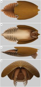 Reconstruction of Titanokorys gainesi by Lars Fields. Source: https://royalsocietypublishing.org/doi/10.1098/rsos.210664