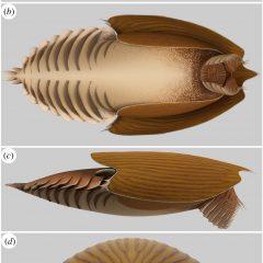 Ancient sea predator had giant head